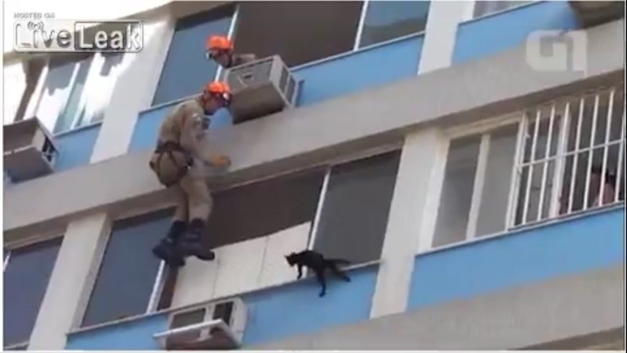 Video Of Cat Fell Off Roof