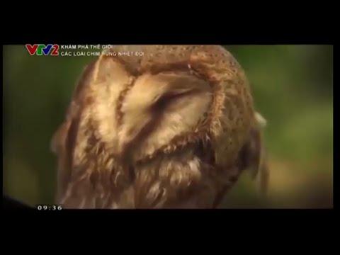 Vẻ đẹp vương quốc loài chim vùng rừng nhiệt đới (Thuyết minh)