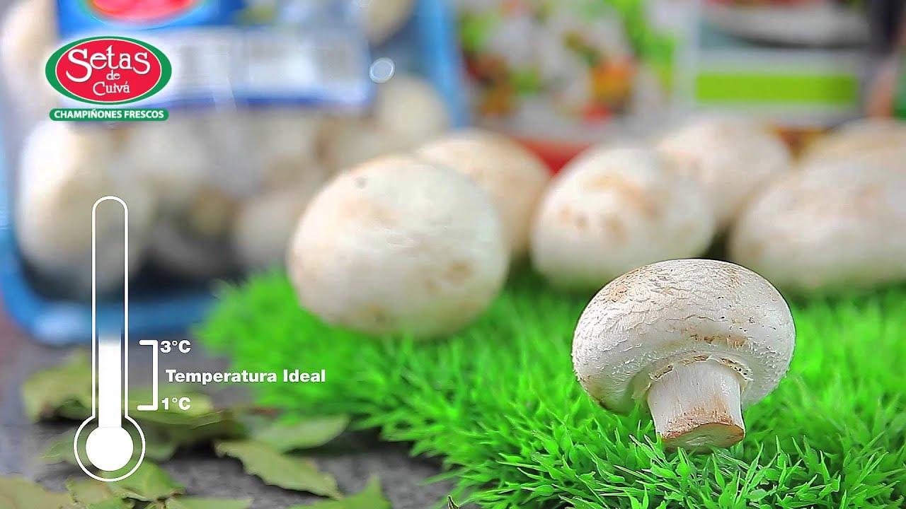 tips pr cticos para el consumo de champi ones frescos setas de cuiv rh youtube com