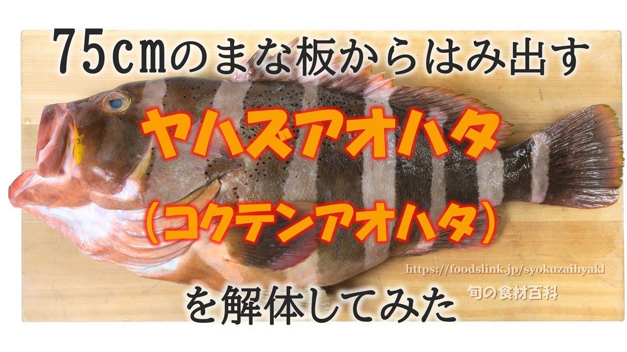 ヤハズアオハタ(コクテンアオハタ)をさばく How to dress a Banded grouper .