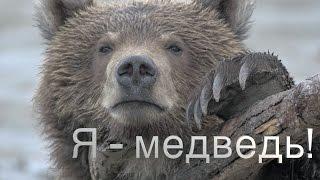 Тизер//Знакомьтесь, бурый медведь Миша, с  Камчатки.//Я - медведь!#0//Природа для самых маленьких.