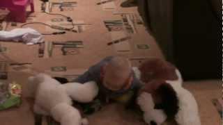 Доставка собак