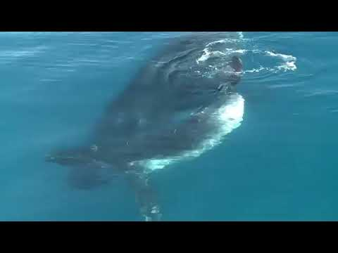 Ngeri ! Suara ikan paus