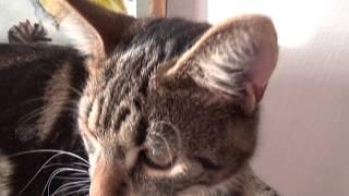 ЧТО ЕСЛИ ДОЛГО СМОТРЕТЬ НА КОТА? | WHAT IF PLAY WITH CAT WITH GHOST | BAGMAN SCREAM