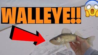 FIRST EVER NEBRASKA WALLEYE ice fishing