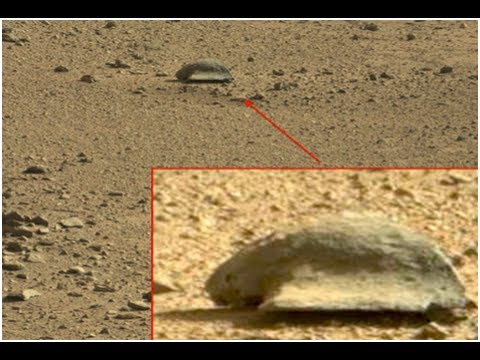 mars rover finds animal - photo #3