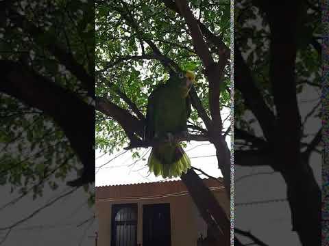 ❤️ a parrot says 'Hola' @ Tatacoa Desert, Colombia