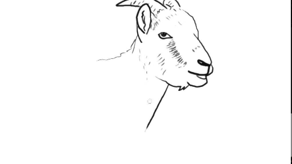 How to Draw a Goat | YZArts | YZArts - YouTube Goat Face Side Drawing