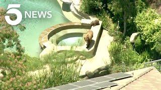 Bear, Cub Spotted Roaming Around Castaic Neighborhood