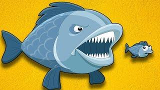 Kayıp Balık Tamo