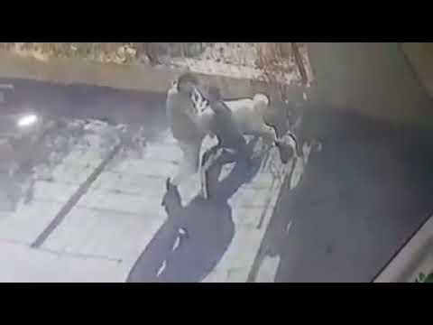 akita dog takes revenge his owners