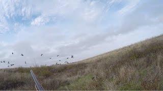 #9 Ходовая Охота Осенью в Степи. Охота на Полевую и Степную Дичь с Курцхааром МР153