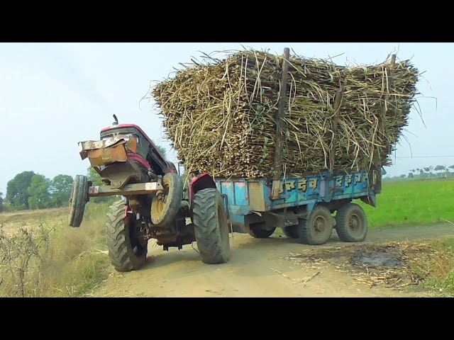 Mahindra Arjun 605 with full loaded trolley of Sugarcane pulling by Old Escort 55