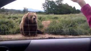 Полный ржач, привет медвед, лучшие приколы с животными, 2014 май, угар