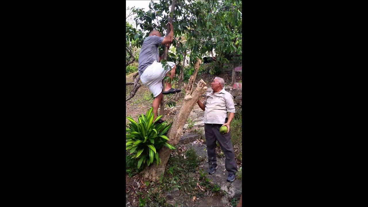 Puerto Rico Guanabana Fruit Wwwbellissimonyccom