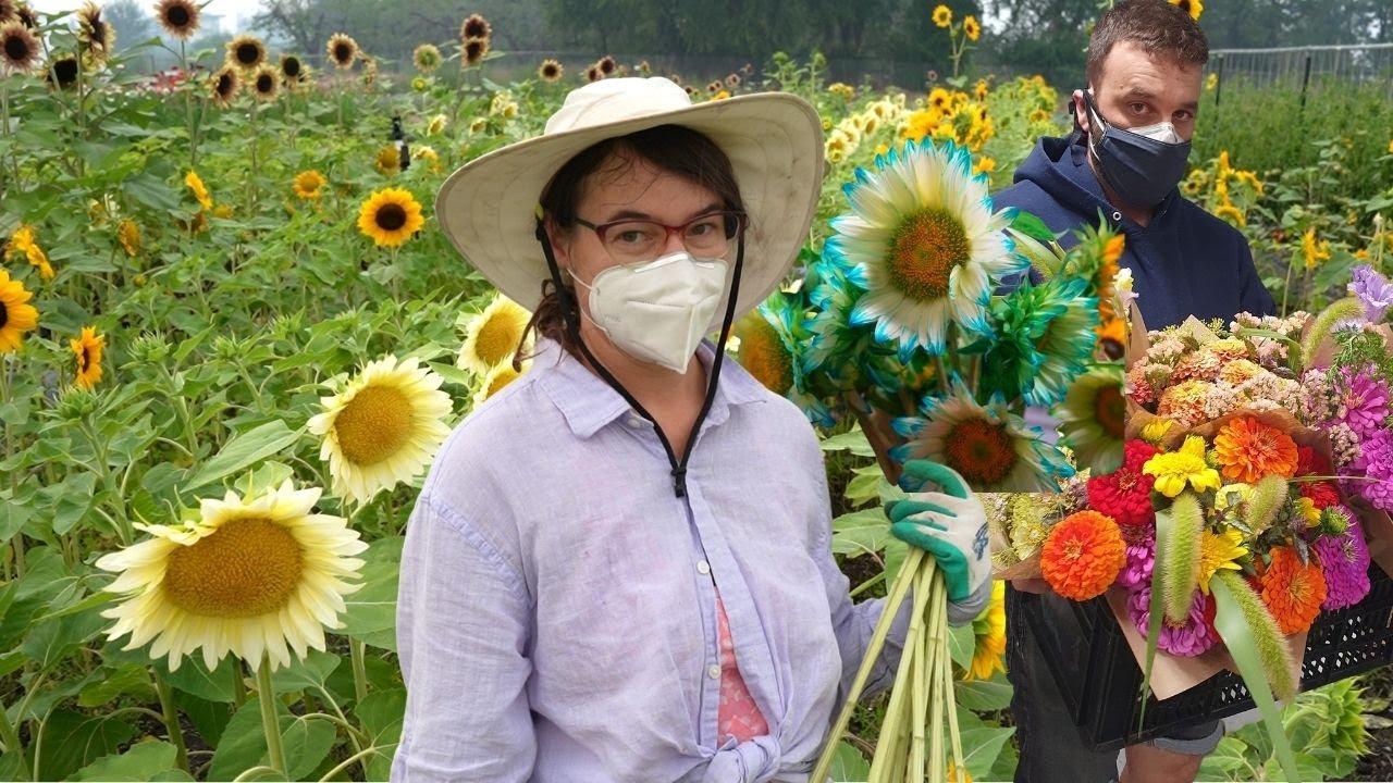 Massive Flower Harvest Heading To Market   And BLUE SUNFLOWERS?!?