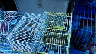 Астраханский птичий рынок