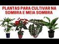 Plantas Para Ser Cultivadas A Sombra E Meia Sombra