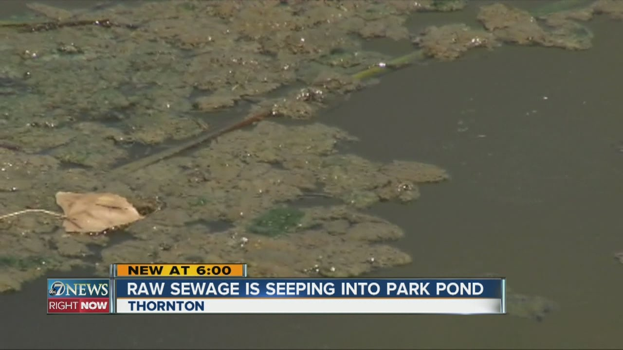 Raw Sewage Is Seeping Into A Thornton Park Pond