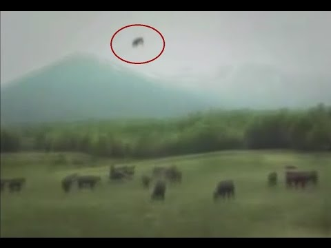 Cow Being Abducted by (UFO) Flying Saucer Shaped in Japan - FindingUFO