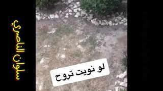 سناب سلوان الناصري، سناب كرار الصغير، سناب احمد زوره