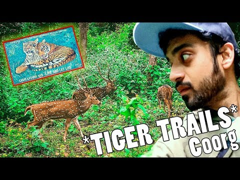 *SCARED* IN THE TIGER FORESTS OF COORG | SOUTH INDIA ROADTRIP PART 3