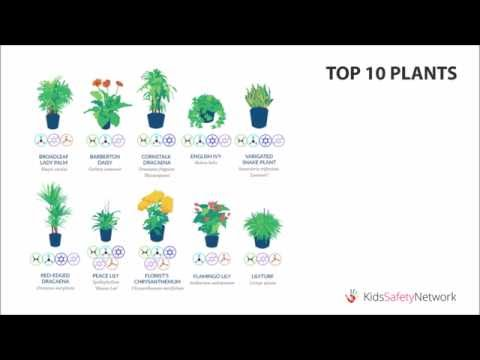 Best Air-Filtering Plants, According to NASA