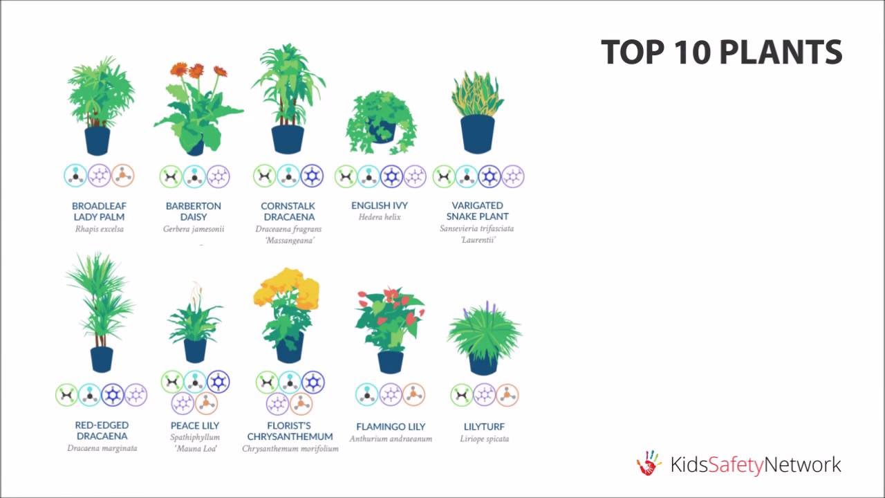 Best Air-Filtering Plants, According to NASA on best floor plants, best plants for shade, best house design, best bulb plants, best house architecture, best aquatic plants, best container plants, best hedgerow plants, best aquarium plants, best house materials, best succulent plants, best fake plants, best sidewalk plants, best cemetery plants, best house accessories, best patio plants, best office plants, best tree houses, indoor plants, best curb appeal plants,