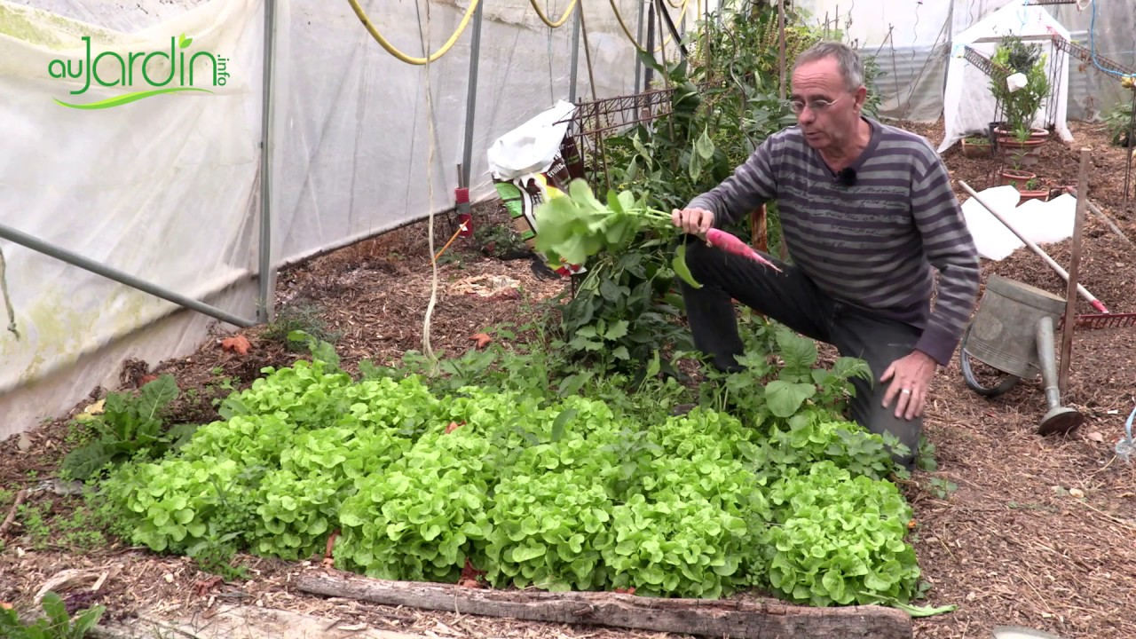 Que Planter En Octobre Sous Serre idées de plantations sous serre après l'été
