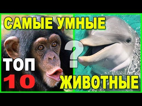 Вопрос: Какие были научные исследования интеллекта домашних животных?