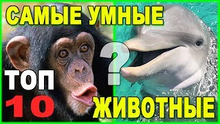 Самые умные животные Земли: Топ-10