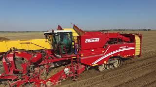 Wielki kopanie ziemniaków na 3x Grimme // Top Farms