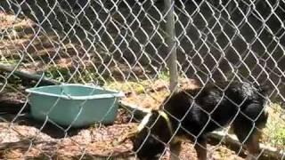 Mortie - Rat Terrier Miniature Pinscher - Adoptable Dog - Rescue Dog