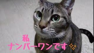 シェルター最多出演⁉️きじ猫一家❗