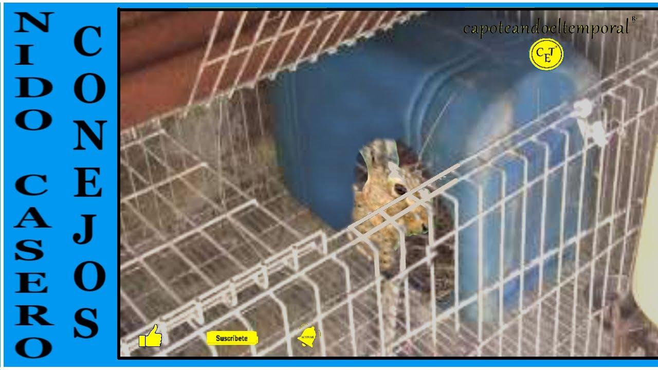 Nido casero para conejos nest home for rabbits youtube for Como hacer un criadero de cachamas