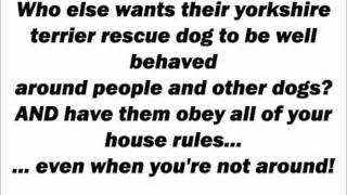 Yorkshire Terrier Rescue - Secrets Of Yorkshire Terrier Rescue Training - Yorkshireterrierrescue.wmv