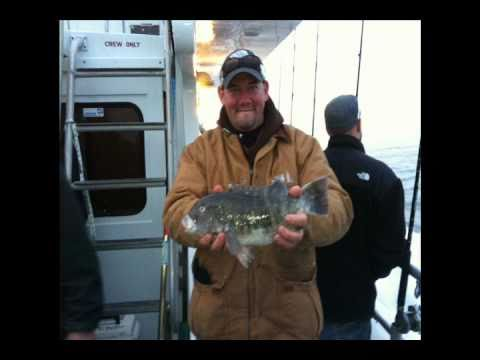 Nj saltwater fisherman 39 s barnegat black fishing islander for New jersey saltwater fishing regulations