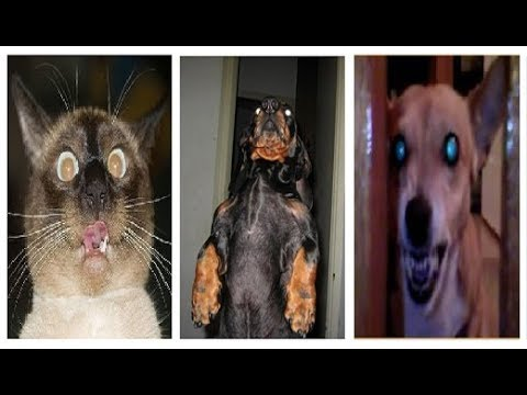 Possessed Cats And Dogs Horror Movie Style Compilation