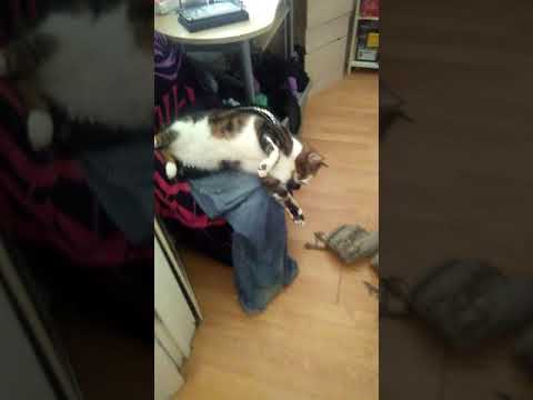 RARE FAT CAT/RABBIT HYBRID SIGHTING