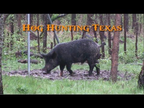 Hog Hunting Texas – Wild Boar Headshots