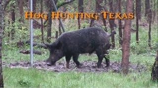 Hog Hunting Texas - Wild Boar Headshots