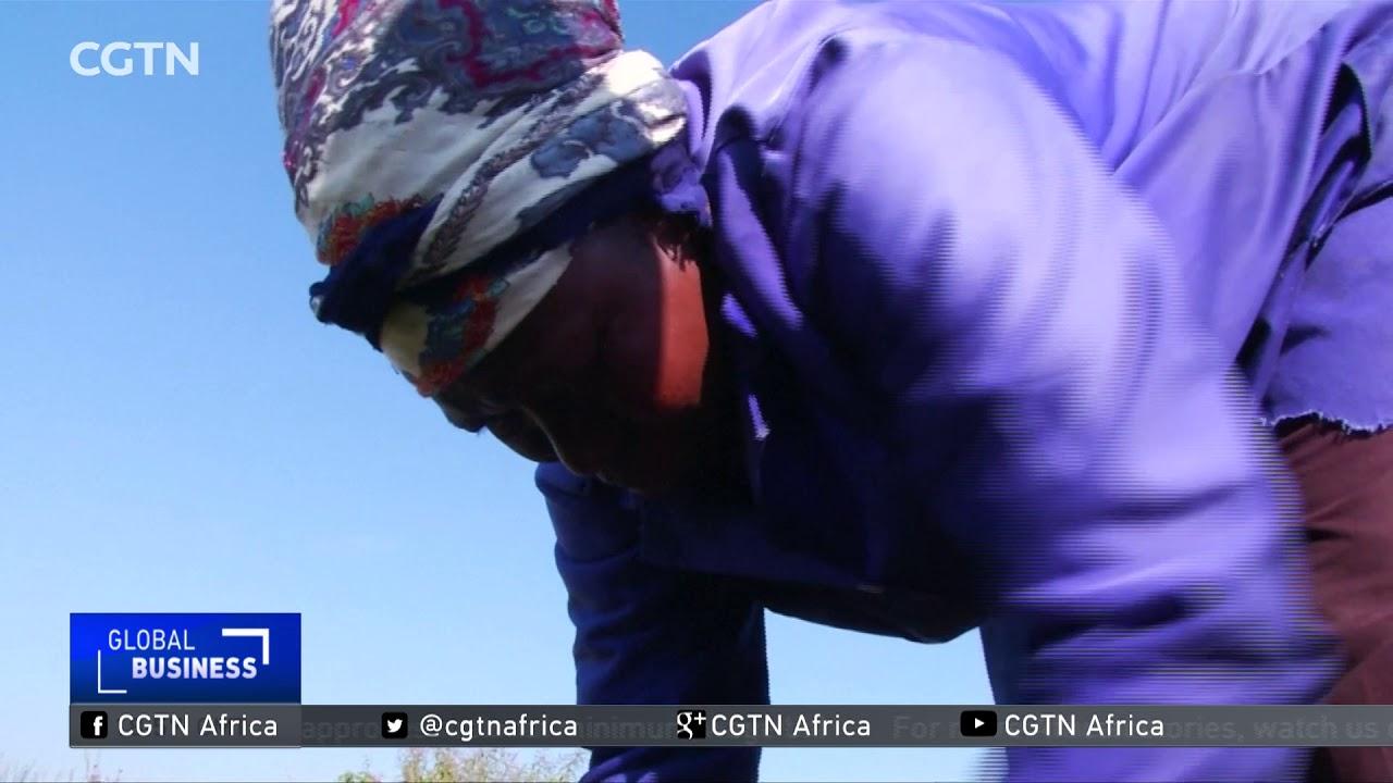 South African entrepreneur turns dumping site into garden - YouTube