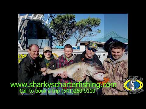 45 Pound Lingcod Coos Bay, Oregon