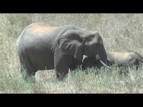 Tsavo National Park West, Kenya - elephants