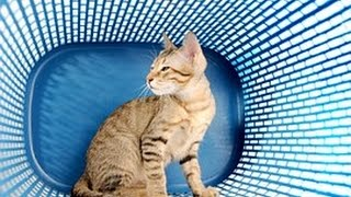 Новые Забавные Животные на Видео | смотреть свежие приколы про животных