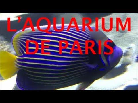 UNE VIDÉO EXCEPTIONNELLE L'AQUARIUM DE PARIS