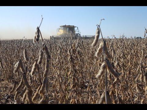 2018 Soybean Harvest Cab Cam - Chris Schlumbohm, Logan County