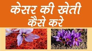 केसर की खेती कब और कैसे करें. Kesar ki Kheti ki Puri Jankari Hindi me