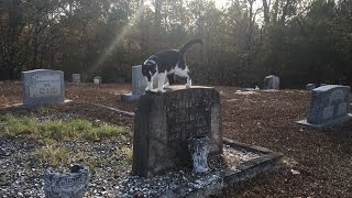 Long Lost Grave of Elvis's Twin Brother - Jesse Garon Presley thumbnail