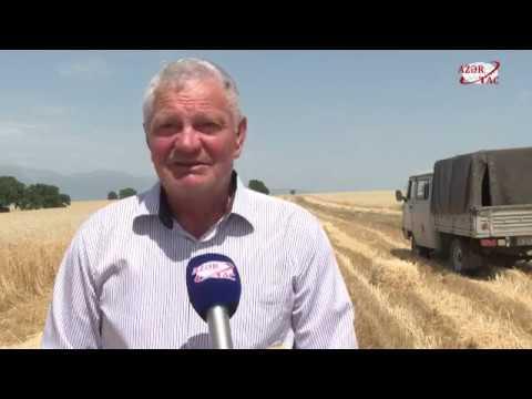 В Ивановке начался сбор зерна